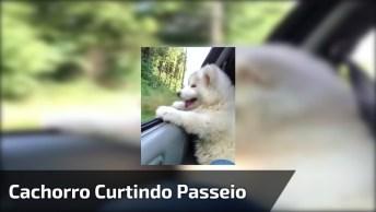Cachorrinho Curtindo Passear Na Janela Do Carro, Veja Que Fofo!