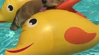 Cachorrinho Curtindo Piscina, Neste Calor Nada Mais Gostoso!