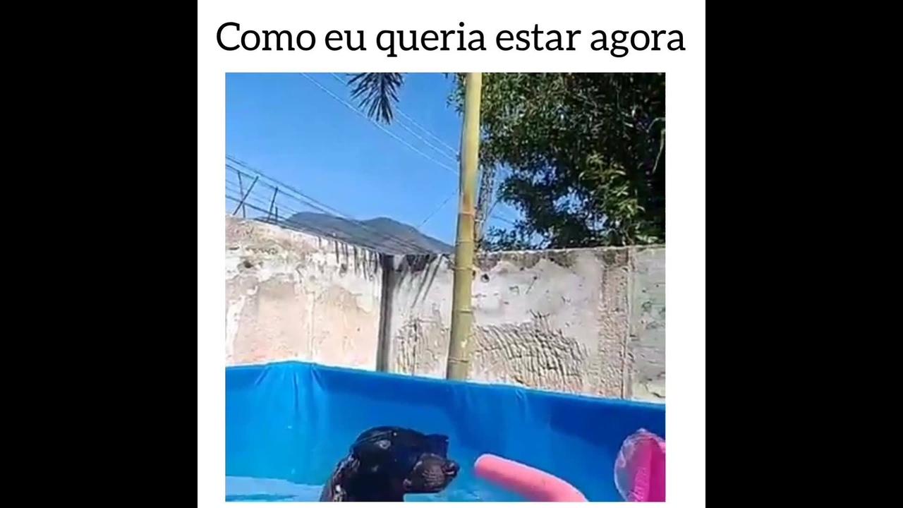 Cachorrinho curtindo piscina para se refrescar