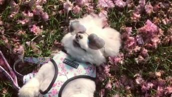 Cachorrinho Curtindo Um Solzinho, Também Nesse Frio Nada Melhor Né!