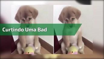 Cachorrinho Curtindo Uma Bad, Quem Nunca Ficou Assim?