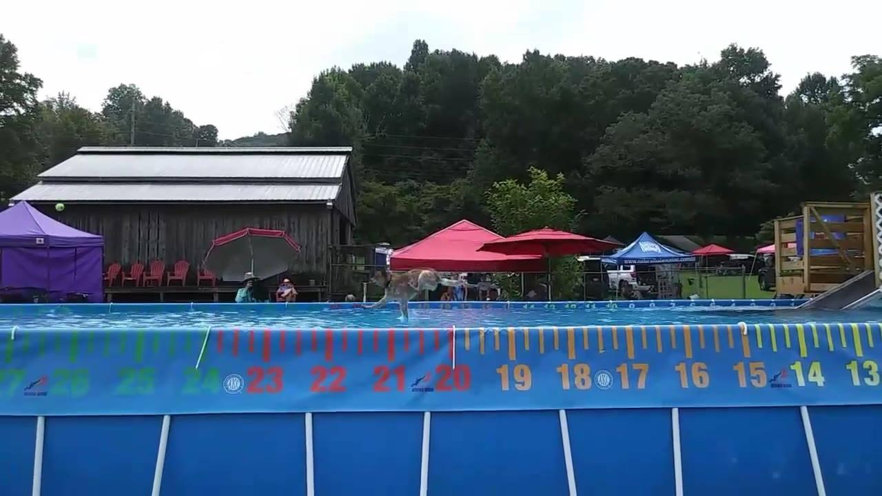 Cachorrinho dá pulo incrível em piscina, veja como foi!