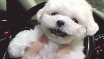 Cachorrinho Da Sorriso Para Seu Dono Depois De Receber Carinho, Que Fofura!
