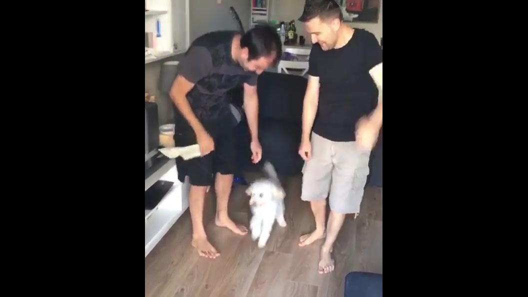 Cachorrinho dançando com seus amigos