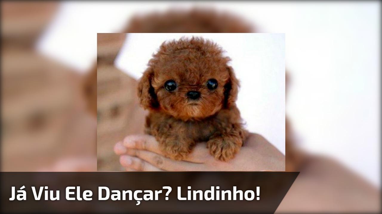 Cachorrinho dançando forró, muita fofura para um vídeo só!!!