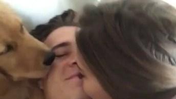 Cachorrinho Dando Beijinhos No Papai Junto Com A Mamãe, Olha Só Que Amor!