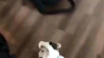 Cachorrinho Dando Boas Vindas Ao Papai Humano, Que Fofura!