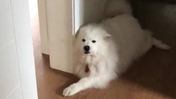 Cachorrinho Dando Bom Dia Para Sua Dona, Olha Só Que Fofinho!