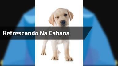 Cachorrinho De Refrescando Em Cabana, Olha Só A Carinha Dele Lá Dentro!