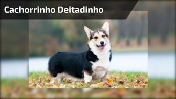 Cachorrinho Deitadinho Em Sua Caminha Fazendo Charminho Pra Mamãe!