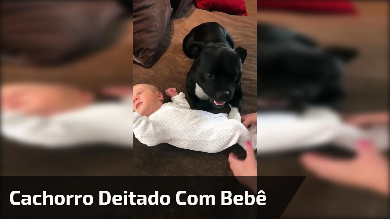 """Cachorrinho deitado com """"seu"""" bebê, não quer saber de ninguém o tirar de perto!"""