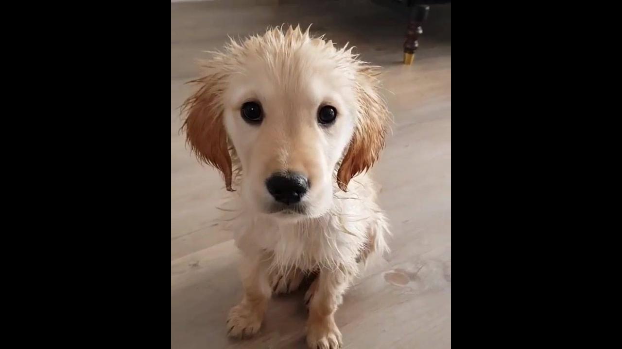 Cachorrinho depois do banho, olha só esta carinha linda, encantador!!!