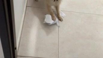 Cachorrinho Destrói Correspondência E Papel Higiênico, Veja A Reação Dele!