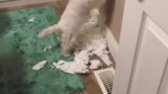Cachorrinho Destruindo Um Rolo De Papel Higiênico, Parece Que Alguém Fez Arte. . .