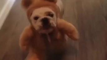 Cachorrinho Dom Fantasia De Ursinho, Veja Que Imagem Mais Engraçadinha!