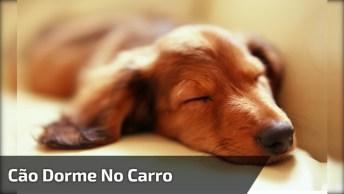 Cachorrinho Dorme Com Voltinha De Carro, Quem Disse Que Só Funciona Com Bebês?