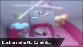 Cachorrinho Dormindo Ao Som Do Móbile, Olha Só Que Fofura!