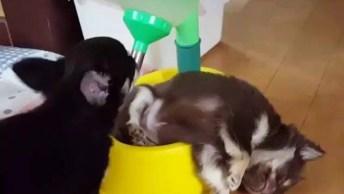 Cachorrinho Dormindo Em Lugar Inusitado, Veja A Posição Que Ele Esta!