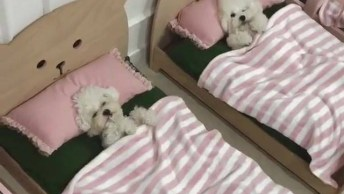 Cachorrinho Dormindo Em Suas Caminhas, Que Coisinhas Mais Lindas!
