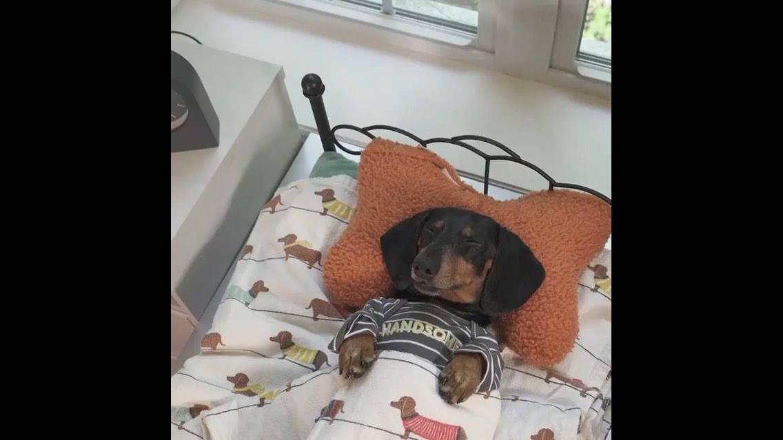 Cachorrinho dormindo na caminha e com despertador do lado
