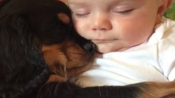 Cachorrinho E Bebê Dormindo Juntos, Uma Amizade Que Vai Durar A Vida Toda!