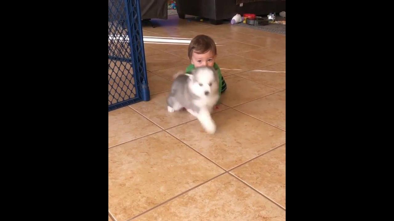 Cachorrinho e bebê em um momento de muito amor e fofura