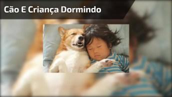 Cachorrinho E Garotinha Tirando Um Cochilo Juntos, Que Fofura!