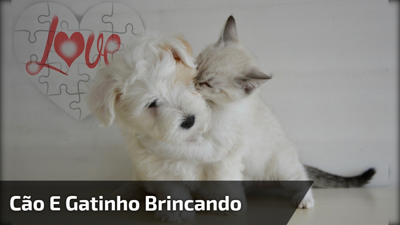 Cachorrinho e gatinho brincando juntos, eles são fofos demais!