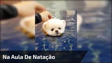 Cachorrinho Em Aula De Natação, Olha Só O Tamaninho Dele Que Fofo!