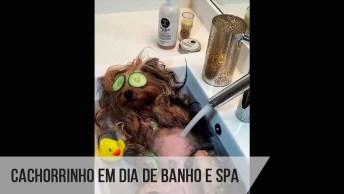 Cachorrinho Em Dia De Banho E Spa, Olha Só A Tranquilidade Do Amiguinho!