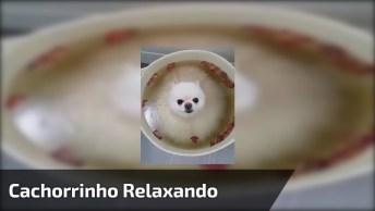 Cachorrinho Em Um Momento Relaxante, Olha A Carinha Dele De Que Esta Gostando!