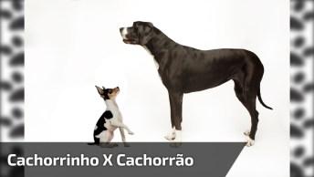 Cachorrinho Enfrentando Um Cachorrão, Ele Não Tem Medo Hein!