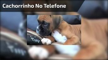 Cachorrinho Escutando A Voz Da Mamãe Humana No Telefone, Olha A Reação Dele!