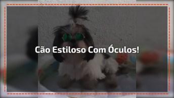 Cachorrinho Estiloso Com Óculos Escuro Indo Tomar Banho De 'Piscina'!