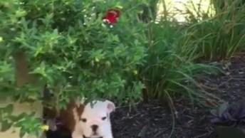 Cachorrinho Explorando O Quintal, Mas Parece Que Se Assustou Hahaha!
