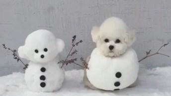 Cachorrinho Fantasiado De Bonequinho De Neve, Olha A Carinha Dele!