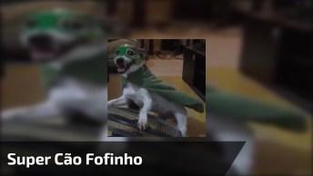 Cachorrinho Fantasiado De Super Cão, Olha A Carinha Dele De Quem Esta Gostando!