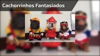 Cachorrinho Fantasiados Para O Carnaval, Olha Só Que Coisinha Mais Engraçada!