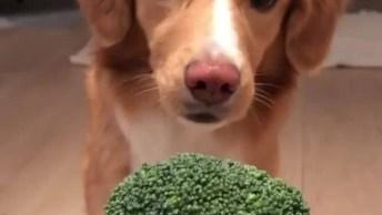 Cachorrinho Faz De Tudo Para Poder Comer Brócolis, Olha Só Como É Inteligente!
