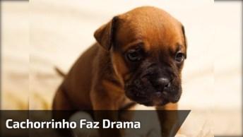 Cachorrinho Faz O Maior Drama Só Para Não Tomar Banho, Ele Finge De Morto!