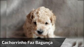Cachorrinho Faz Uma Bagunça Em Casa E Fica Com Cara De Coitado!