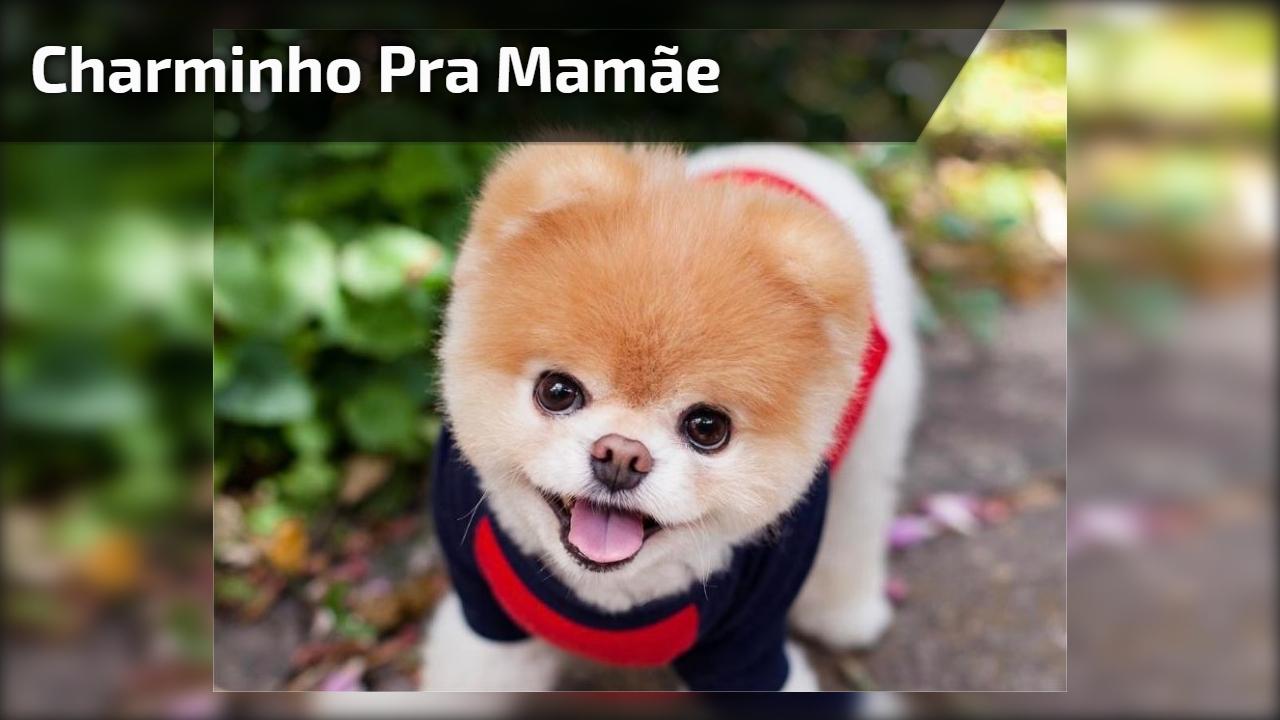 Charminho pra mamãe
