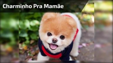 Cachorrinho Fazendo Charminho Pra Mamãe, Olha Só Que Coisinha Mais Fofa!
