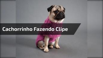 Cachorrinho Fazendo Clipe De Música, Alguém Achou Ele Talentoso?