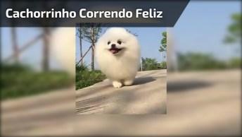 Cachorrinho Fazendo Corrida, Olha Só A Carinha Feliz Dele!