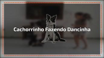 Cachorrinho Fazendo Dancinha Da Internet Com A Dona, Olha Só Que Figura!