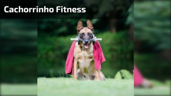 Cachorrinho Fazendo Exercício, Olha Só Que Coisinha Mais Fofa!