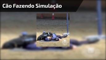 Cachorrinho Fazendo Simulação De Salvamento De Policial, Veja Que Lindo!