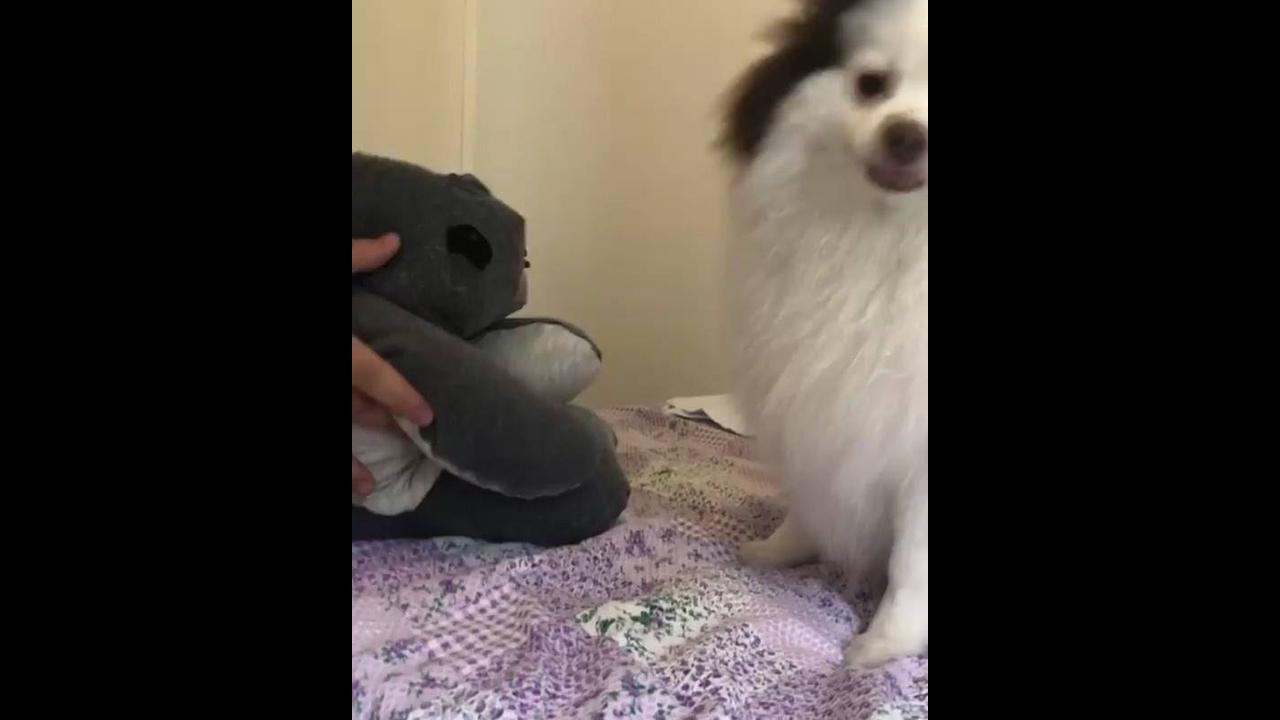 Cachorrinho fazendo toquinho