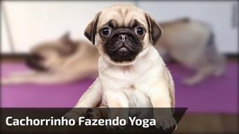 Cachorrinho Fazendo Yoga, Veja Como Ele Manda Super Bem Nos Movimentos!